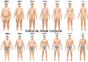 indice-de-grasa-corporal