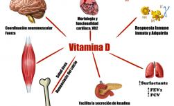 5 Beneficios de la Vitamina D Para tus musculos