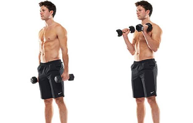 Guía de Bíceps