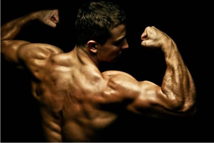 aumentar músculos