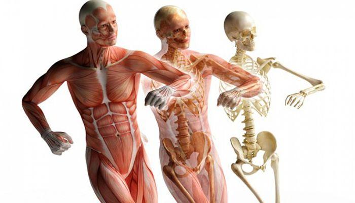 Evita el catabolismo muscular