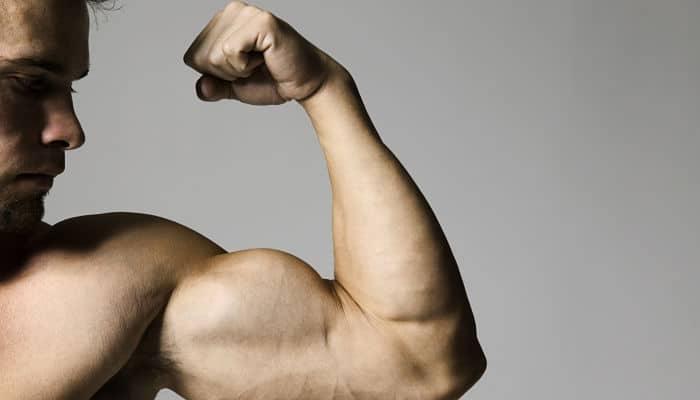 Construcción del musculo