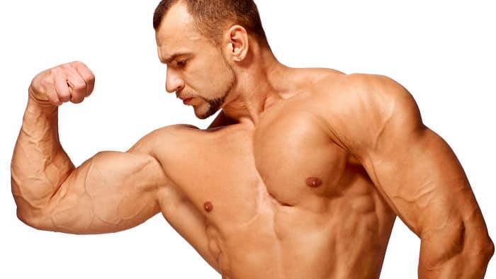 Músculos magros