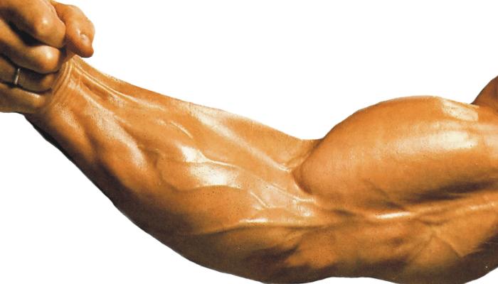Calcio en los músculos