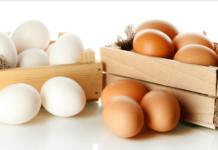 Proteína del huevo