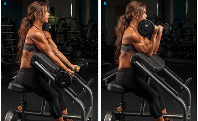Músculos en forma