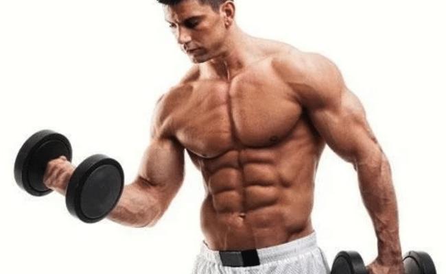 Desarrollo de los músculos