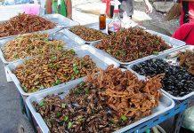 proteínas de insectos